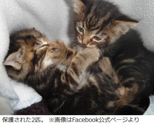 道に捨てられた猫を犬が救う、猫たちが入った袋くわえ飼い主のもとへ。