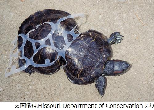 ピーナッツ型の甲羅を持つカメ、ポイ捨てされたゴミの影響で ...